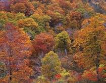 行く人なしに秋の暮れ
