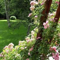 スタンダードツイン・ガーデンビュー、バルコニーを彩る薔薇
