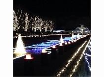 昭和記念公園【冬】 イルミネーション一例
