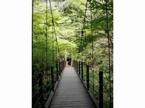 高尾山【夏】 つり橋