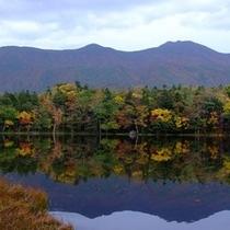 紅葉時期も美しい秋の知床五湖