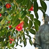 【ジョン万次郎像と満開の藪椿】