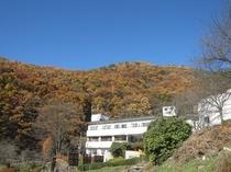 紅葉の裏山