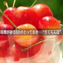 【初夏】5月下旬〜6月下旬 さくらんぼ狩り
