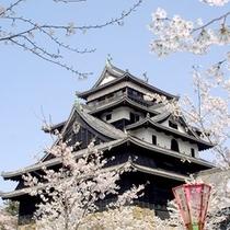 松江城(桜)