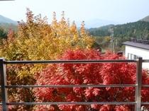 西側客室からの眺望(紅葉)