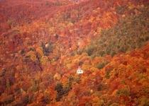 紅葉の蔵王ロープウェイ山麓線