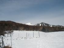 冬の県営牧場