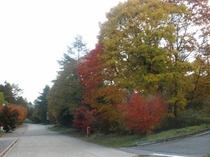 清里高原の紅葉4