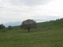 清里高原の春1