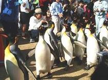 ペンギン水族館1