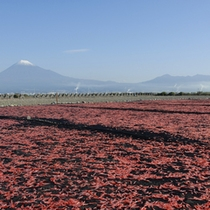 【周辺観光】 イメージ 桜えびと富士山