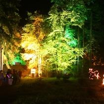 【音と光のファンタジー花火 in KAGURA】ダイナミックな花火と幻想的な光の祭典