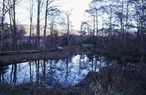 菅平湿原の池