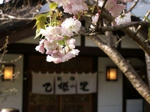 【外観】玄関前の桜/例