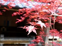 【風呂】露天風呂の紅葉/例
