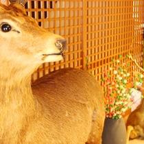 館内 鹿の剥製