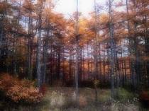 ノマの森の向こう