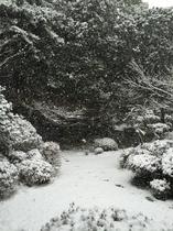 2016雪の庭1