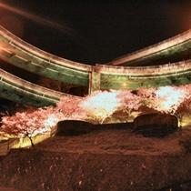 【河津桜ライトアップ】七滝ループ橋など、様々なスポットで幻想的な夜桜散策を楽しんでは