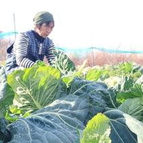 女将さん畑で収穫