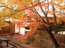 法然院の紅葉