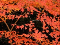 紅葉の穴場です