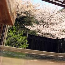 露天風呂からの桜