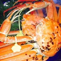 【特大越前かに】茹で蟹は姿のままでお出しします。背中の蟹ヒルが旨さの象徴です。