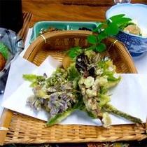 ■山菜の天ぷら一例■