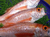 魚の王様ノドグロ