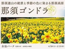 全長600mのゲレンデ全面に約30万球の可憐で鮮やかな水仙の花が黄色いじゅうたんの様に咲き誇ります!!