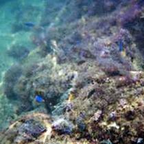 透明度抜群の小土肥海水浴場