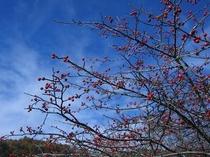 唐花見湿原のウメモドキ