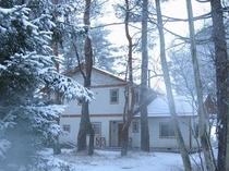 冬の「森のみち草」