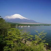 山中湖畔から新緑と富士山