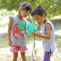 【園内風景】夏の楽しみと言えばコレ★昆虫採取!!かごの中に入ったかな・・・?