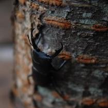 【園内風景】クヌギ林でクワガタやカブトムシを見つけることができるかも♪