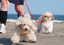 一ツ松海岸で散歩1