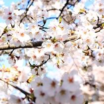 周辺_春(桜)