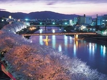 足羽川桜並木(夜)