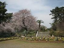 お林展望公園