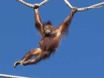 旭山動物園『おらんう-たん館』