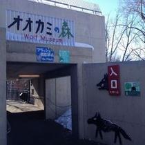冬の旭山動物園 おおかみの森