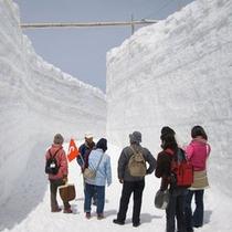 立山黒部アルペンルート【雪の回廊】