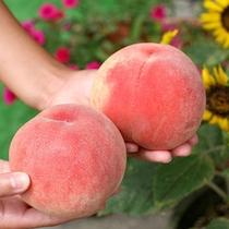 *【フルーツライン】吾妻連峰の麓を走る、約14kmにわたる道には果物畑が広がり、販売店や果物狩りも