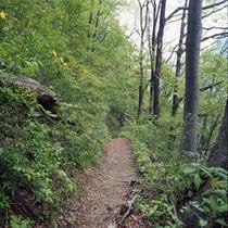 龍王峡ーハイキング道。川治側半分は自然道。