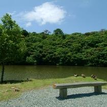 初夏の丹生の池には生き物がいっぱい