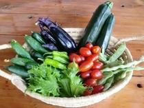 朝採り 新鮮野菜