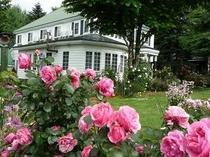 庭に咲くレオナルド・ダ・ヴィンチ